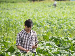 mSTAR: Accelerating Data-Driven Agriculture Development in Cambodia and Nepal