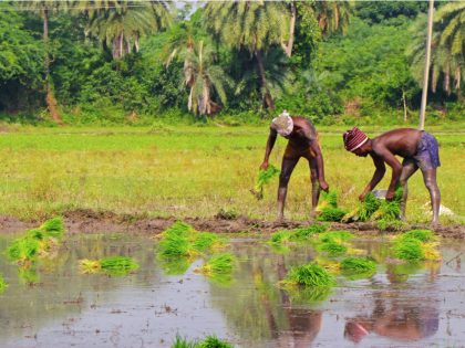 Designing a Development Impact Bond to Expand Agri-Insurance Coverage