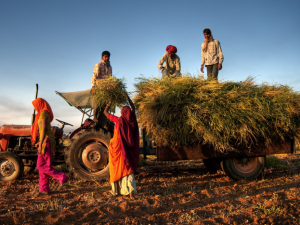 Field Diary: Improving and Expanding Agricultural Micro-insurance for Indian Farmers