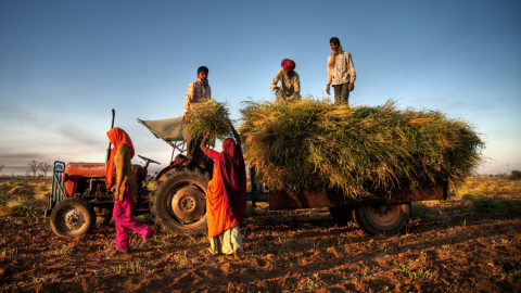Field Diary: Expanding Agricultural Micro-insurance for Indian Farmers