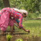Learning Study on Smallholder Farmers in Eastern Uttar Pradesh