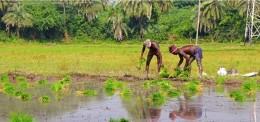 Crop Insurance: Increasing Uptake Among Indian Farmers